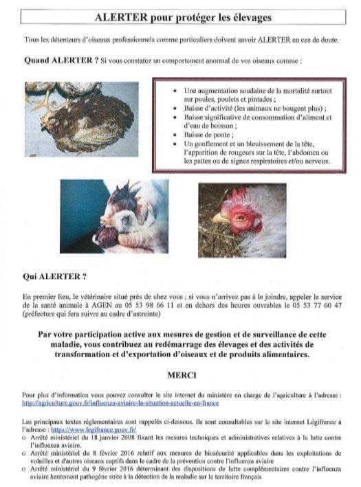 influenza_aviaire_02